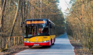 zdjęcie autobusu linii 800